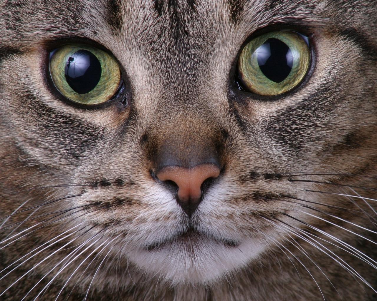 /var/www/html/wp-content/uploads/2018/08/mirada-felina-curiosa
