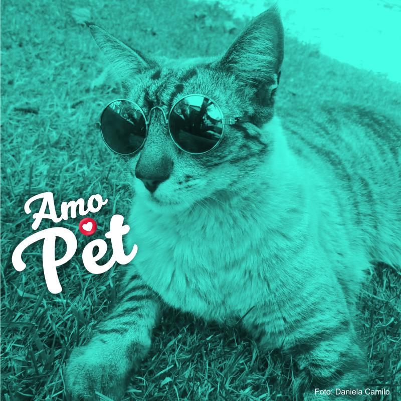 /var/www/html/wp-content/uploads/2018/11/amopet