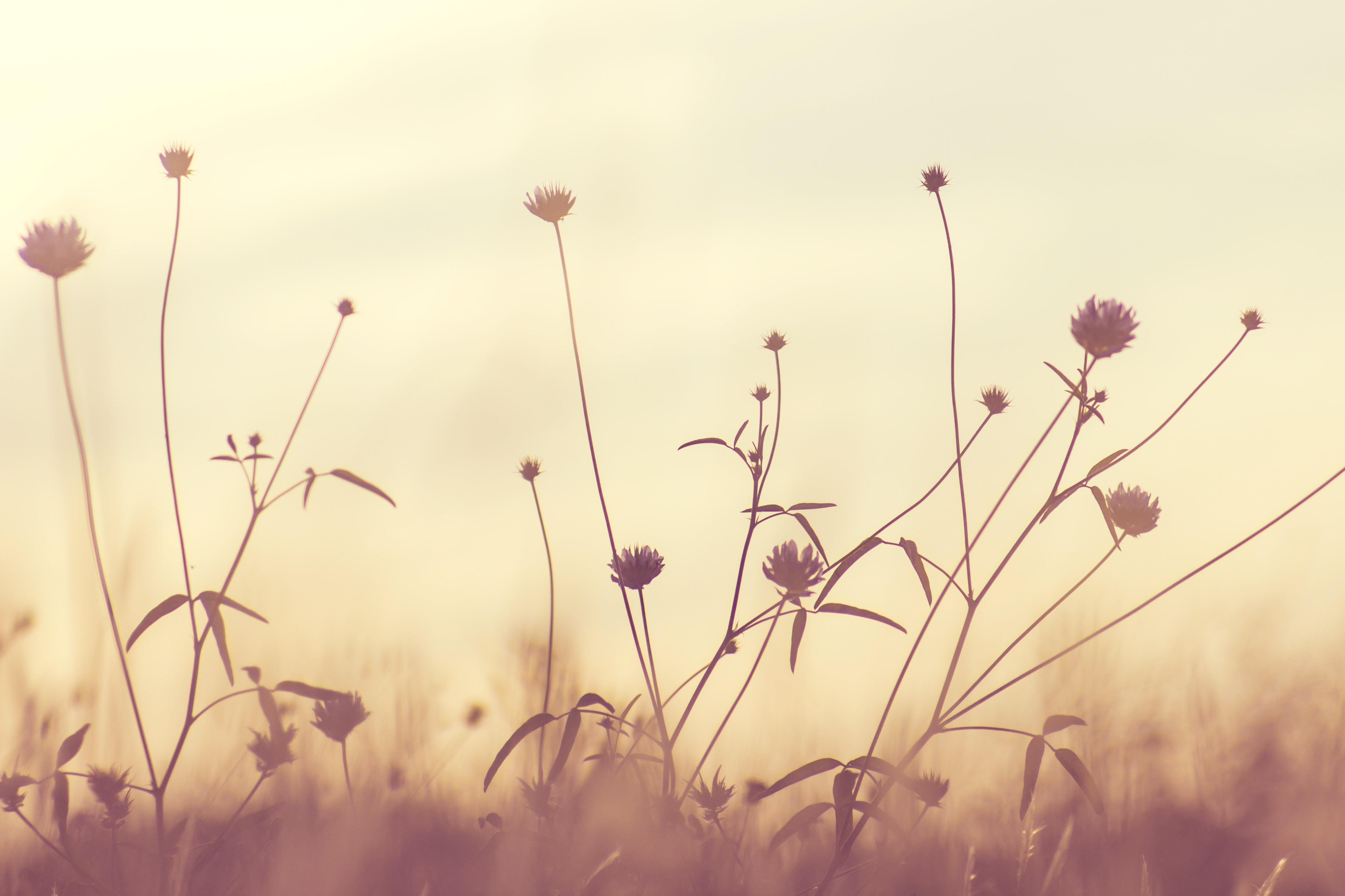 /var/www/html/wp-content/uploads/2018/11/bloom-blossom-flora-114735-1