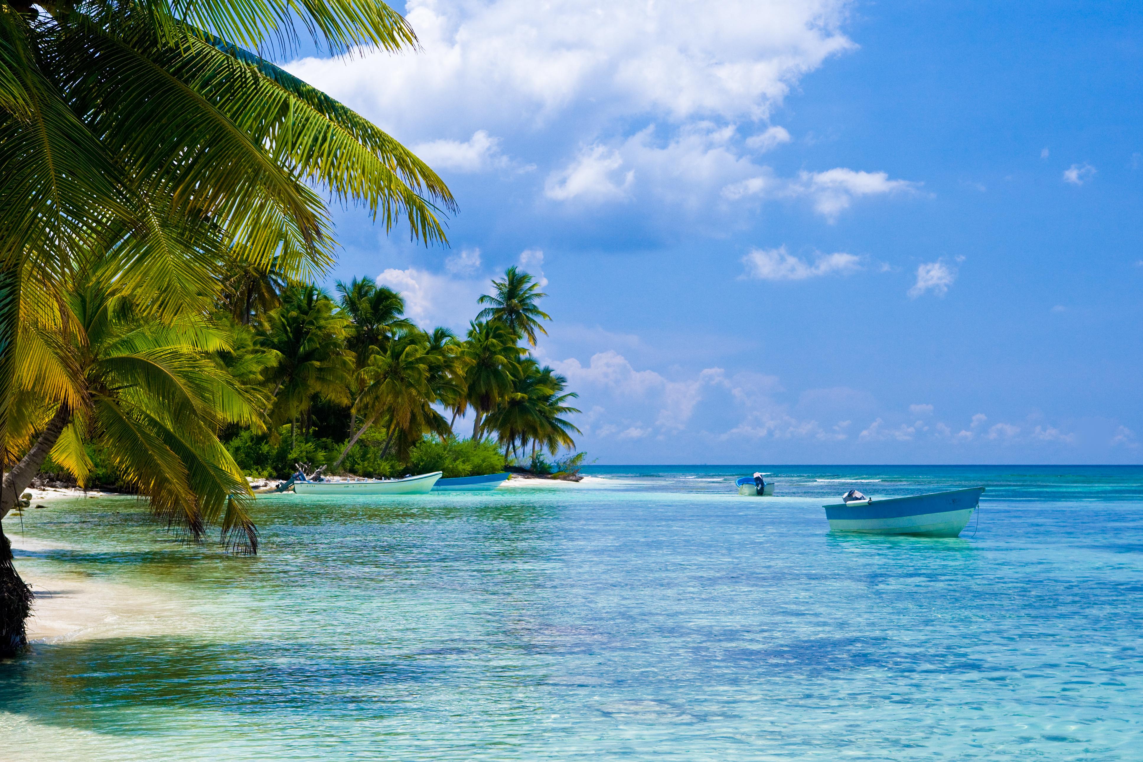 Green palms on a white sand beach