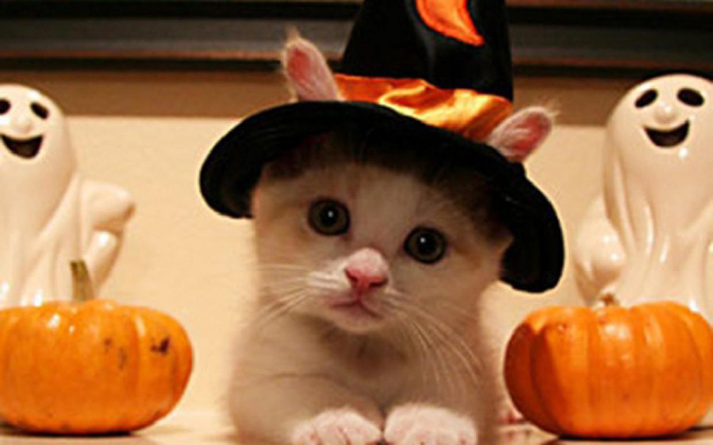 halloween-cat-211