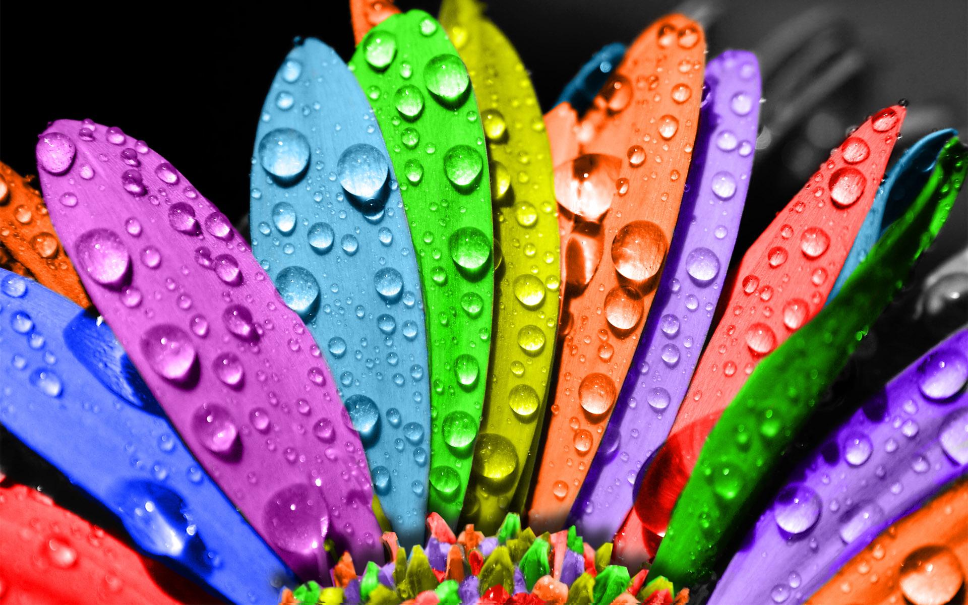Creative_Wallpaper_Colored_Petals_020711_