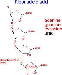 Rna-structure