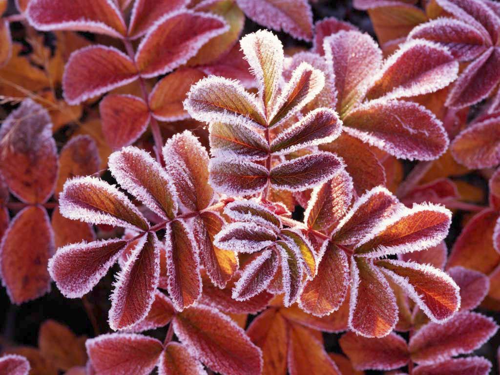 Winter-Leaves