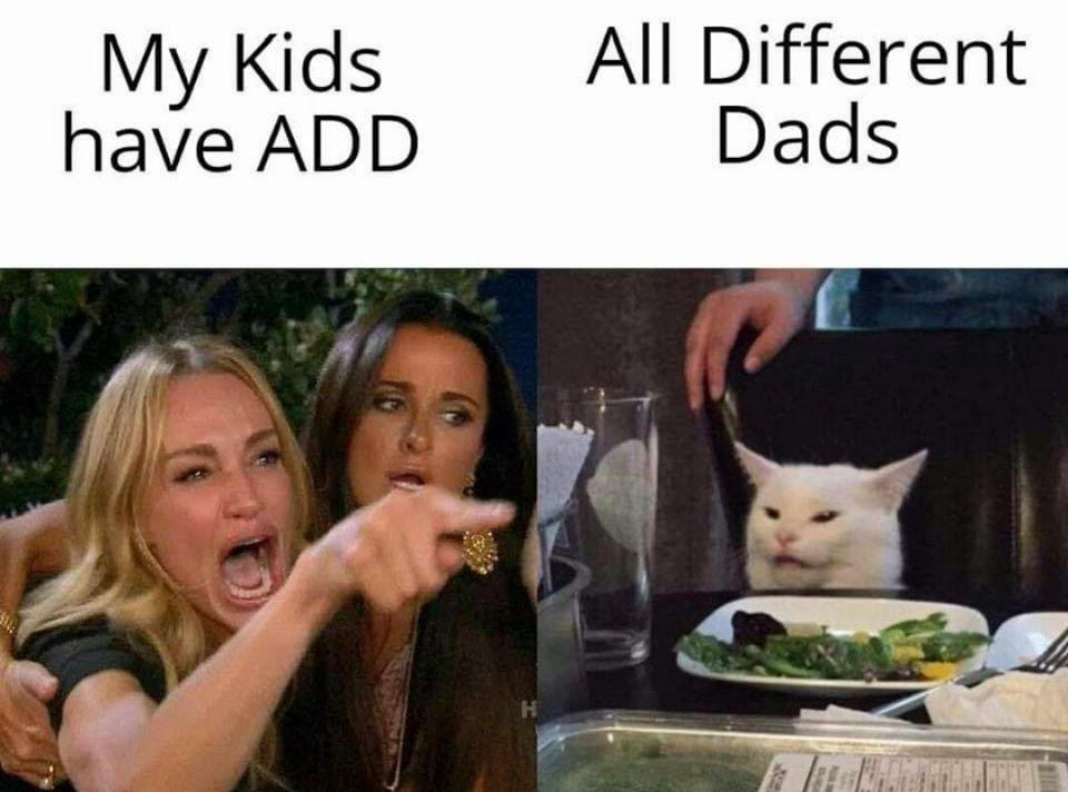 meme-gato