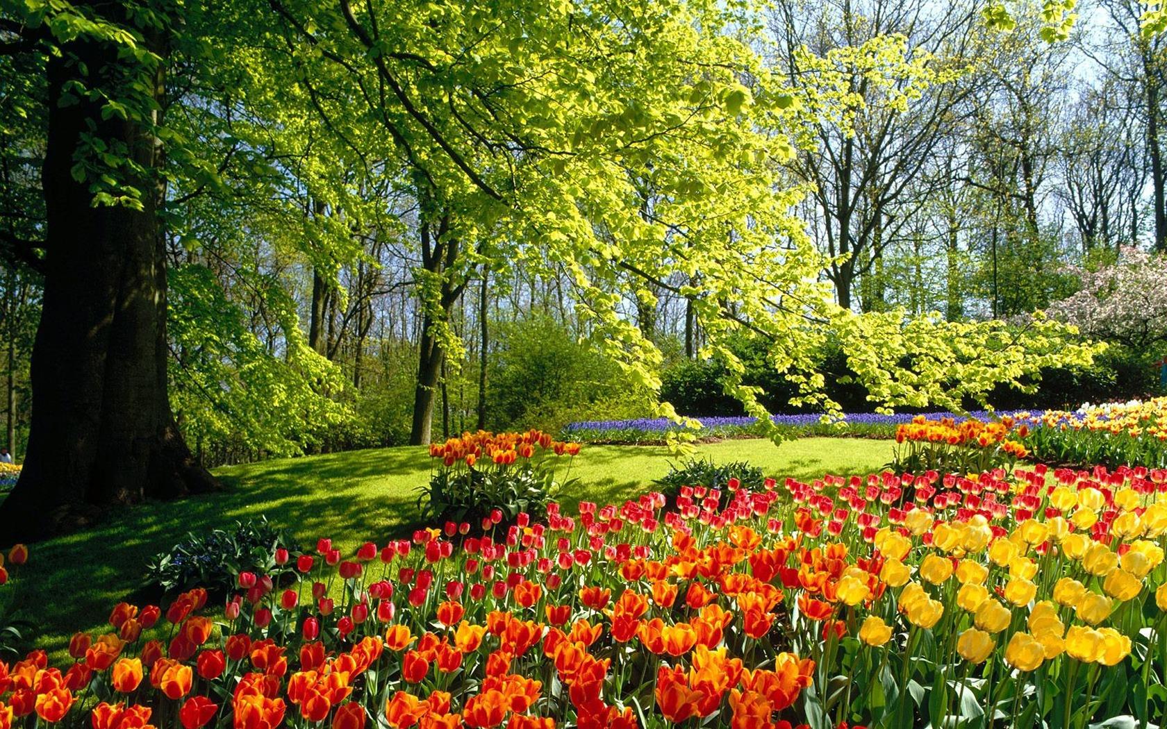 spring-park-1680-1050-3348