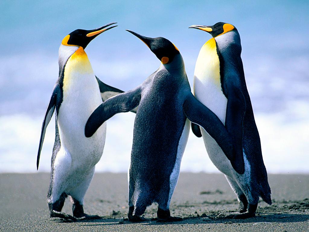 Penguins-1