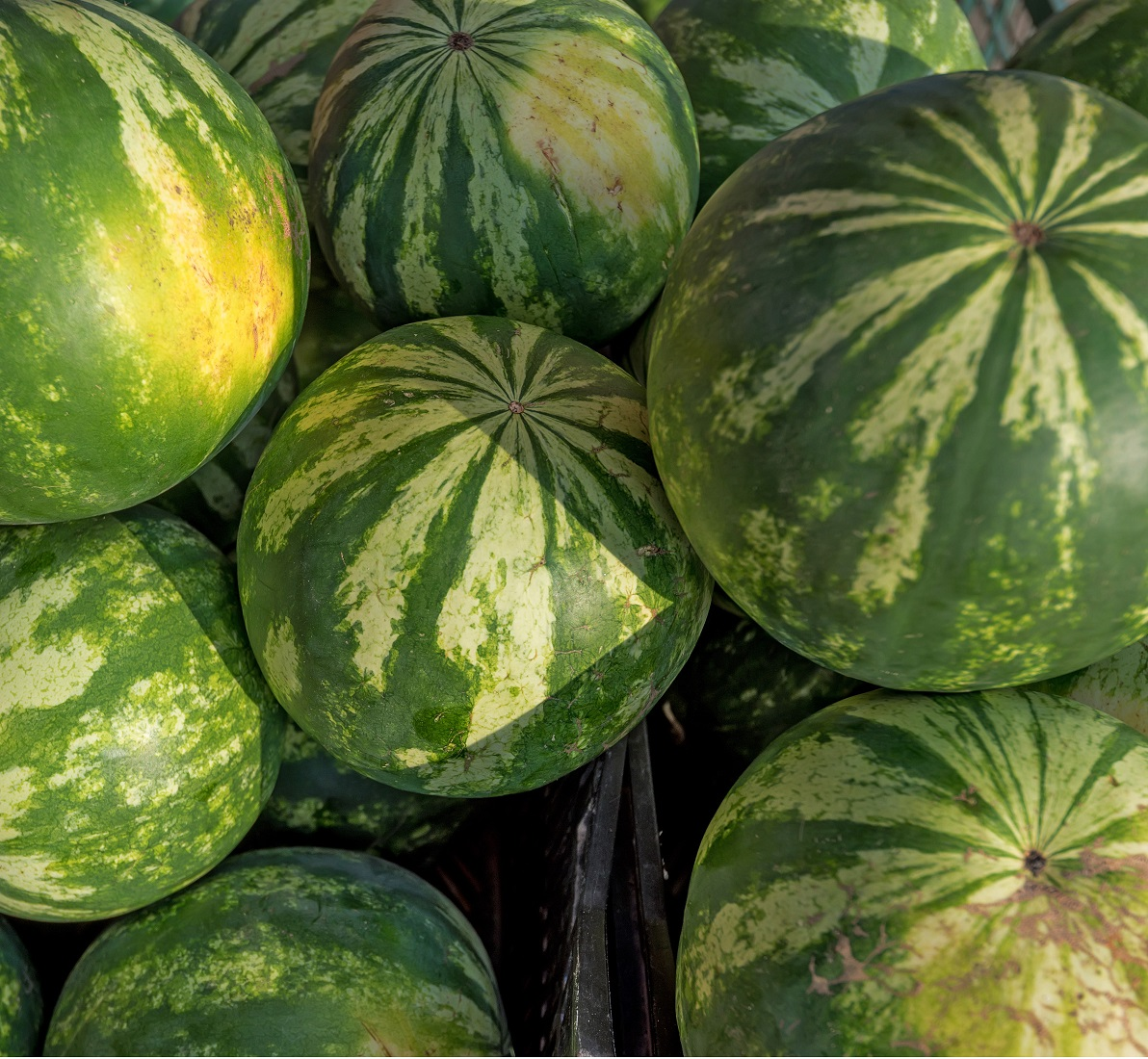 Watermelons on the market